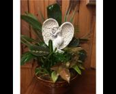 Angel Dish Garden in Myrtle Beach, South Carolina, La Zelle's Flower Shop