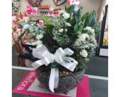 Large Dish Garden  in Lehigh Acres, Florida, Bright Petals Florist, Inc.