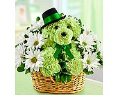 St. Paddy Dog in Aston PA, Wise Originals Florists & Gifts