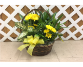 Dish Garden with Fresh Flowers in Purcellville, Virginia, Purcellville Florist