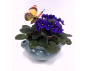 African Violet Planter in Belleville ON, Live, Love and Laugh Flowers, Antiques and Gifts