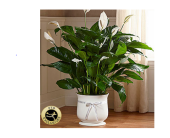 The FTD� Large Comfort� Planter in Manchester, Maryland, Main St Florist Of Manchester, LLC