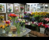 Designer's Choice in Worcester, Massachusetts, Holmes Shusas Florists, Inc