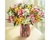 Spring Peruvian Lilies: 50-100 Blooms in Huntington WV, Archer's Flowers, Inc.