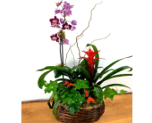 Orchid & More by Raimondi''s Florist in Baltimore MD, Raimondi's Flowers & Fruit Baskets