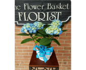 Blue Hydrangea in Ellicott City, Maryland, The Flower Basket, Ltd
