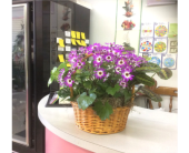 GFG2351 in Buffalo Grove IL, Blooming Grove Flowers & Gifts