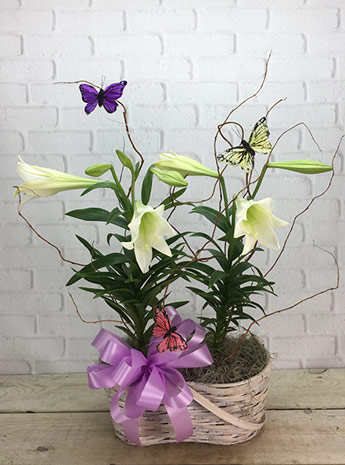 Double Easter Lily in Arlington Heights IL, Sylvia's - Amlings Flowers