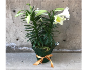 Easter Lily in Boulder CO, Boulder Blooms