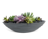 Urban Wave Succulents By Bell Flowers in Silver Spring MD, Bell Flowers, Inc