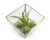 Geometric Square with Air Plants in Silver Spring MD, Bell Flowers, Inc