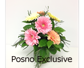 Gerbera Daisies Arranged in London ON, Posno Flowers