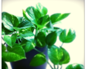 Designer Select Green Plant
