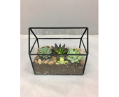 Glass House Succulent Terrarium in Wichita KS, Tillie's Flower Shop