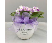 Violets in Bloom in Wichita KS, Tillie's Flower Shop