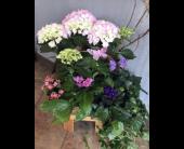 Blooming Garden by The Flower Shoppe in Reading, Massachusetts, The Flower Shoppe of Eric's