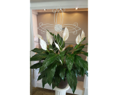 LILY WITH WHITE METAL CROSS in The Villages, Florida, The Villages Florist Inc.