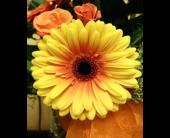 Designer's Choice in West Boylston, Massachusetts, Flowerland Inc.