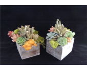 Succulent Garden  in Mitchell, South Dakota, Nepstads Flowers And Gifts