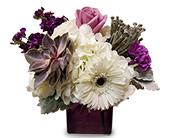 Arlington Flowers - Purple and White - TCU Florist, Inc.