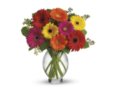 Teleflora�s Gerbera Bright in Fredericton NB, Trites Flower Shop