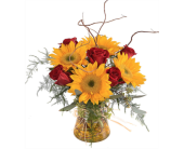 Roses & Sunflowers in St. Louis MO, Walter Knoll Florist