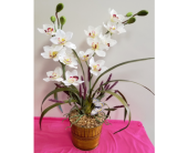 White Orchid in Lehigh Acres FL, Bright Petals Florist, Inc.