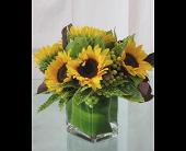 Portland Flowers - Sunflower Style - Flowers Tommy Luke