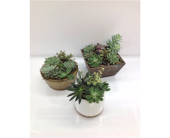 Assorted Succulent Gardens in Smyrna GA, Floral Creations Florist