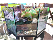 Succulent Terrarium in Pompton Lakes, New Jersey, Pompton Lakes Florist