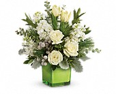 Teleflora's Winter Pop Bouquet in Marysville CA, The Country Florist