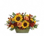 Teleflora's Sunflower Farm Centerpiece in Dover DE, Bobola Farm & Florist