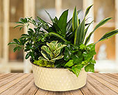 Green Pastures Planter - Deluxe in Dallas TX, In Bloom Flowers, Gifts and More