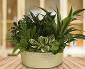 Green Pastures Planter - Premium in Dallas TX, In Bloom Flowers, Gifts and More