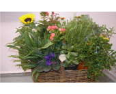 Plant Basket in Etna, Pennsylvania, Burke & Haas Always in Bloom