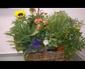 Plant Basket in Etna, Pennsylvania, Burke & Haas Always in Bloom