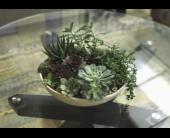 Hyaline Planter