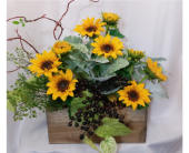 Sunflower Window Box in Grand Rapids MN, Shaw Florists