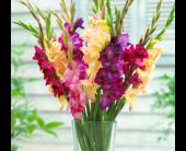 Baltimore Flowers - SALE! Buy 12 Gladiolus Get 6 FREE! - Raimondi's Flowers & Fruit Baskets