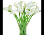 Baltimore Flowers - SALE! Buy 12 Calla Lilies, GET 6 FREE - Raimondi's Flowers & Fruit Baskets