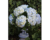 Delft Blues in Birmingham, Michigan, Tiffany Florist