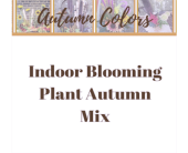 Indoor Blooming Autumn Mix in Eau Claire WI, Brent Douglas