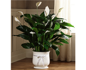 The FTD� 8 inch Comfort Planter  in San Antonio, Texas, Dusty's & Amie's Flowers