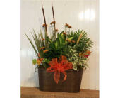 Fall Gardens in Zanesville, Ohio, Miller's Flower Shop