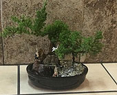 Bonsai 1 in Woodland Hills CA, Abbey's Flower Garden