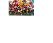 GARDEN OF REST CASKET SPRAY in Waco, Texas, Reed's Flowers