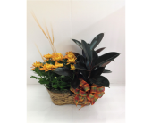 Mum & Rubber Plant Double Basket in Smyrna GA, Floral Creations Florist