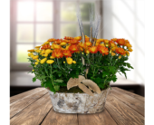 Double Mum Basket in Dallas TX, In Bloom Flowers, Gifts and More