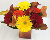 Sunrise Mangoes in Smyrna GA, Floral Creations Florist