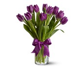 Evergreen Floral, Inc., Paramus, New Jersey - Spring Tulips - Purple, picture